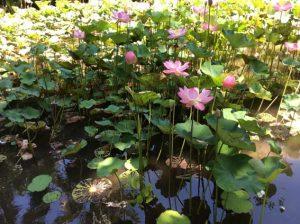 Water Garden Arma Ubud